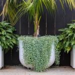 Project-White-Planters-StoneLite-Mixed-Chatswood (16)