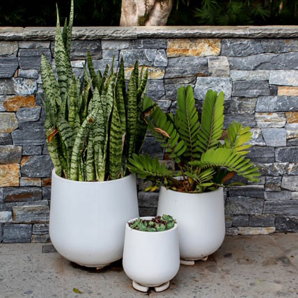 Project-White-Planters-StoneLite-Mixed-Chatswood-feature-image